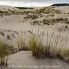 Grassy Oregon Dune