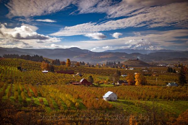 Autumnal Quilt