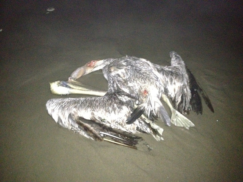 Be careful walking the beach at night, stumbling in the darkness upon what the ocean returns.