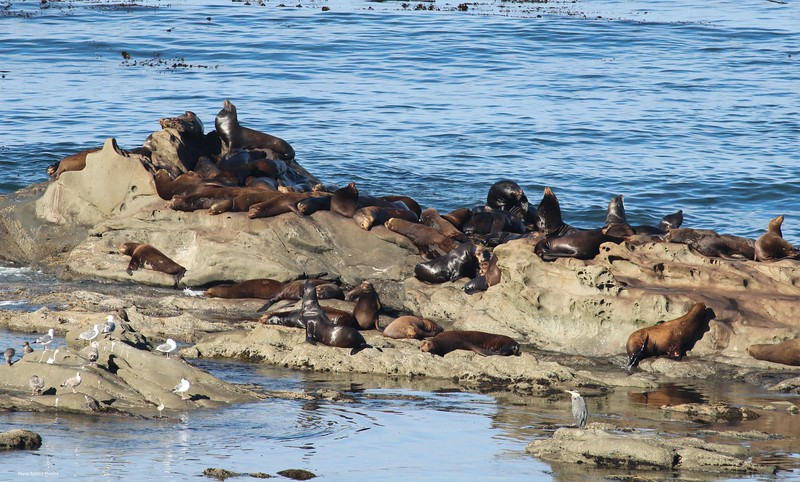 Sealions and Seagulls