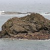 Sealions, Seals and Birds at Simpsons Reef