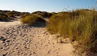 sand-dune-beach-grass