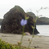 Haystack Rocks on the beach at<br /> Gold Beach, Oregon<br /> July 2007<br /> <br /> Copyright © 2007 Rick Kruer<br /> rickkruer.com<br /> <br /> D200_2007-07-21DSC_2716-BlueFlowerGoldBeach-nice-2.psd