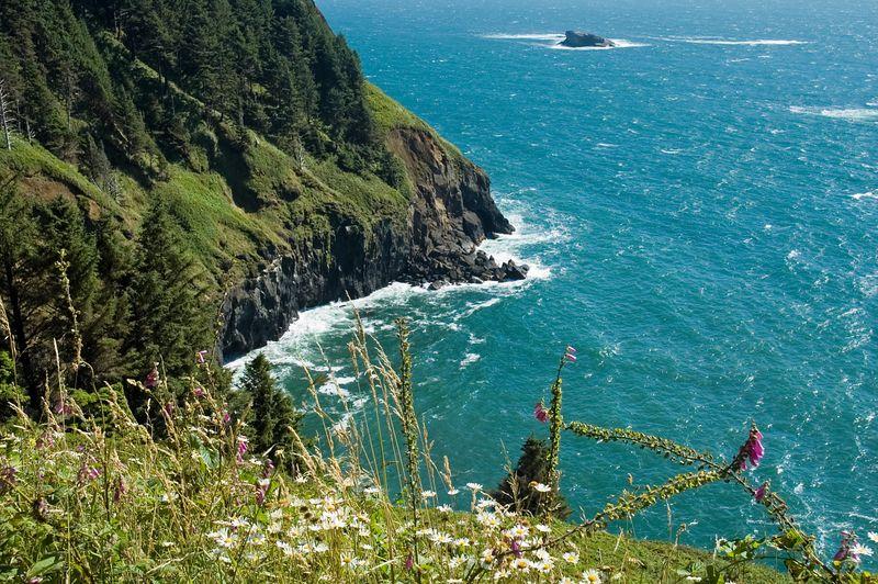 Wildflower Oregon Ocean View <br /> (ND70_2005-07-13DSC_1697-PurpleFlowersOtterCrest-2.jpg)