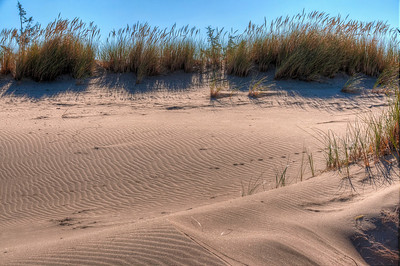 oregon-sand-dunes-grasses
