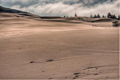 oregon-sand-dunes-11