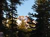 North Sister thru the trees.