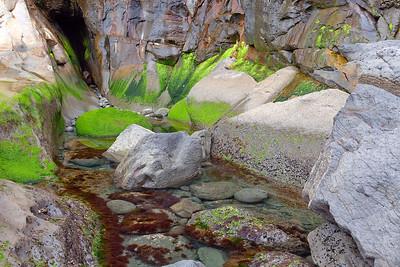 Verdant Tidal Pool