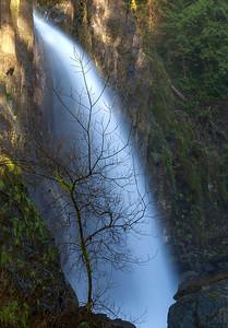 Drift Creek Falls Silhouette