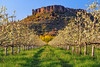 Lower Table Rock and pear orchard. © 2012 Jim Craven, All rights reserved.