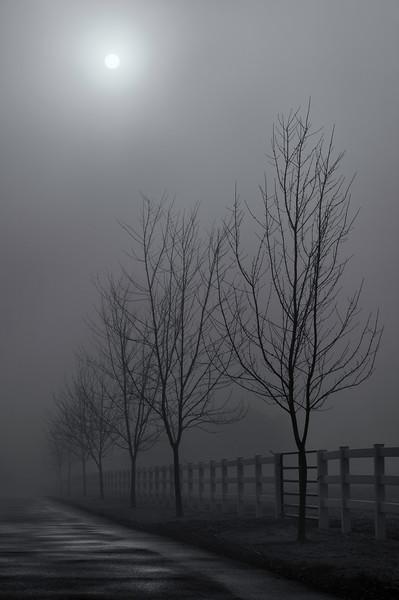 Winter fog scene near Emigrant Lake<br /> © 2012 Jim Craven, All rights reserved.