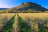Lower Table Rock and pear orchard.<br /> © 2012 Jim Craven, All rights reserved.