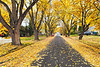 Queen Anne Avenue, Medford, Oregon<br /> © 2011 Jim Craven, All rights reserved.