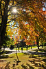 Autumn Leaves at Southern Oregon University<br /> © 2010 Jim Craven, All rights reserved.