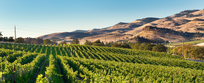 Irvine Vineyards, Ashland, Oregon