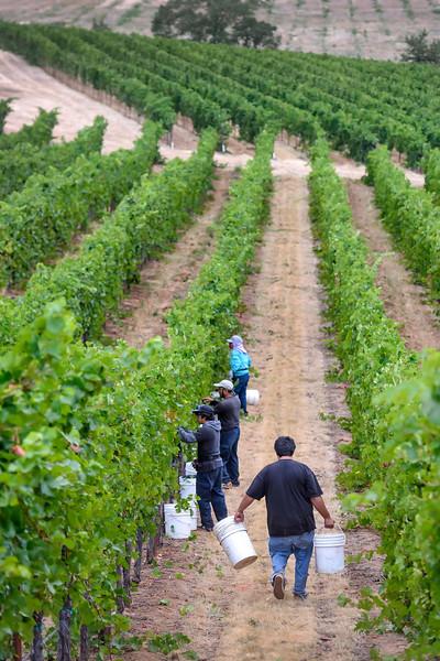 Rogue Valley Vineyard