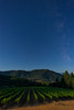 Wooldridge Creek Vineyards <br /> © 2012 Jim Craven, All rights reserved.