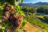 Rogue Valley Vineyard