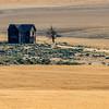 Abandoned Homestead in Wheat Field