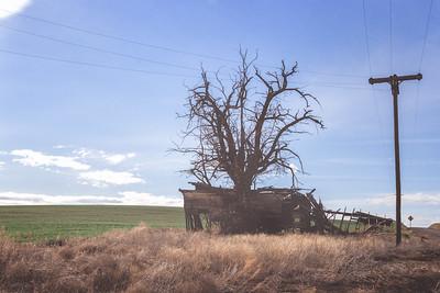 Remains of Myrick Schoolhouse