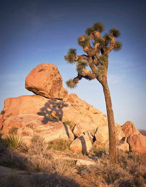 Afternoon Shadows - Joshua Tree National Park, California - Jerry Negele - March 2009