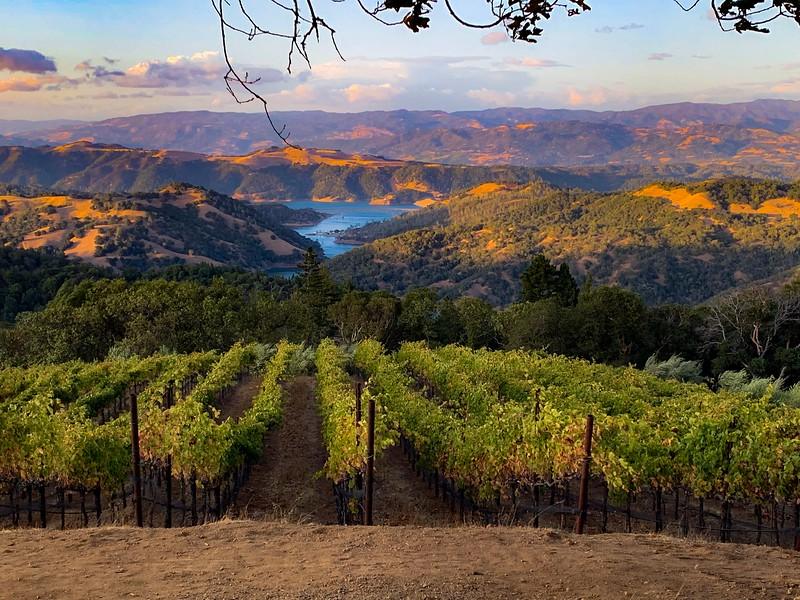 A Vine Vista