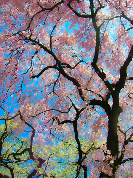 Blooming Tapestry