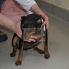 Happy Tails - Transport Tails - May 2012