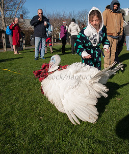 Nantucket Atheneum Turkey Plunge, November 28, 2013