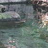 Montreal Biodome - beaver