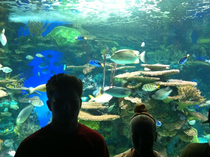 Ripley's Aquarium, Toronto