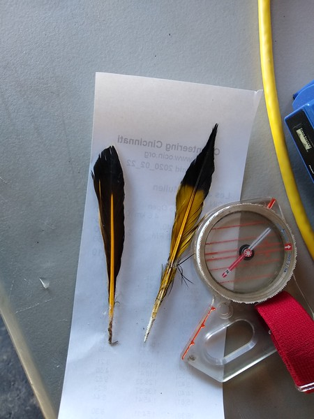 feathers from a northern (yellow-shafted) flicker found at Pyramid Hill.