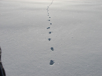 Coyote - alternating trail pattern