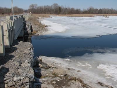 Northern River Otter scat deposited near bridge