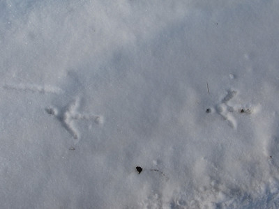 Wild Turkey - tracks