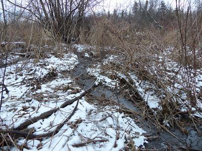 Beaver - trail