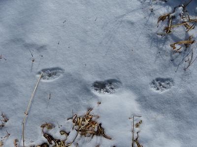 Fisher - tracks