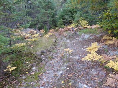Moose -trail