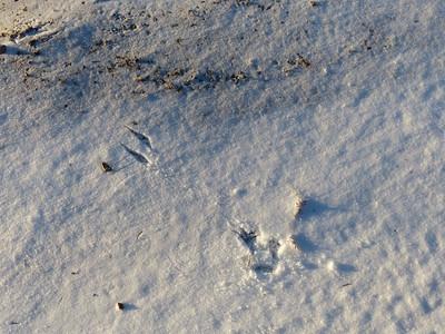 Blue Jay - tracks