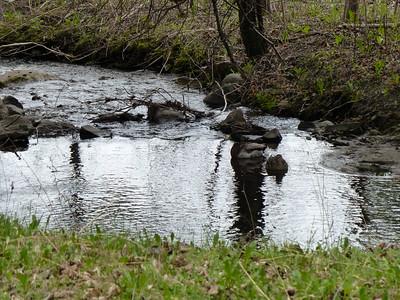 Mallards on Harper Creek