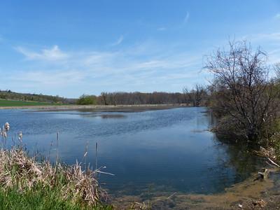Calnan Road pond