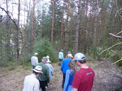 Walking through the Red Pine forest