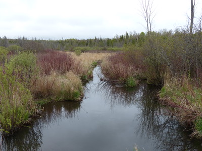 Roadside wetland and creek