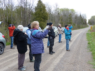 PFN members listening and looking toward wetland for birds