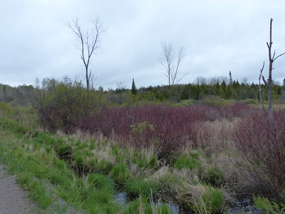 Roadside wetland and creek - several bird species were identified in this area