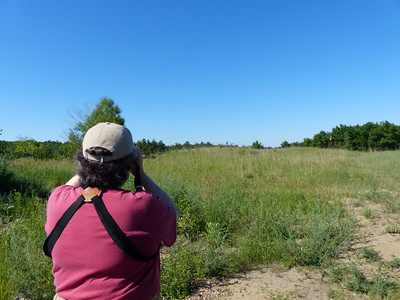 Elizabeth Kellogg scans the tall grass prairie for Bluebirds at nesting boxes
