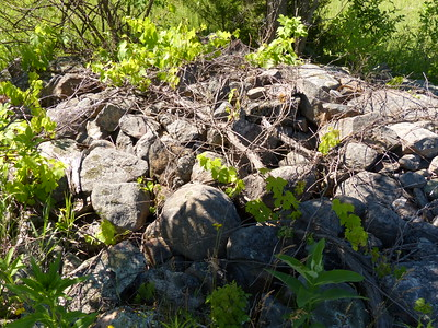 Rock pile leftover from historic farming practices; most of the rocks have lichens growing on their surface.