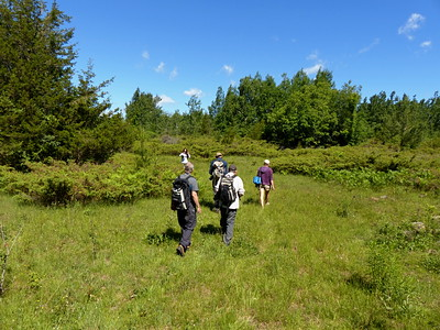 After leaving the forest, the trail meandered through a large meadow, remnants of old pasture fields.