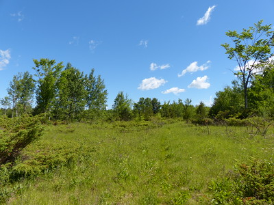 Old pasture field