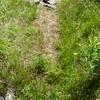 Porcupine - trail